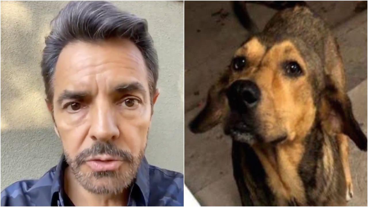 Eugenio Derbez Perro Rodolfo Corazón