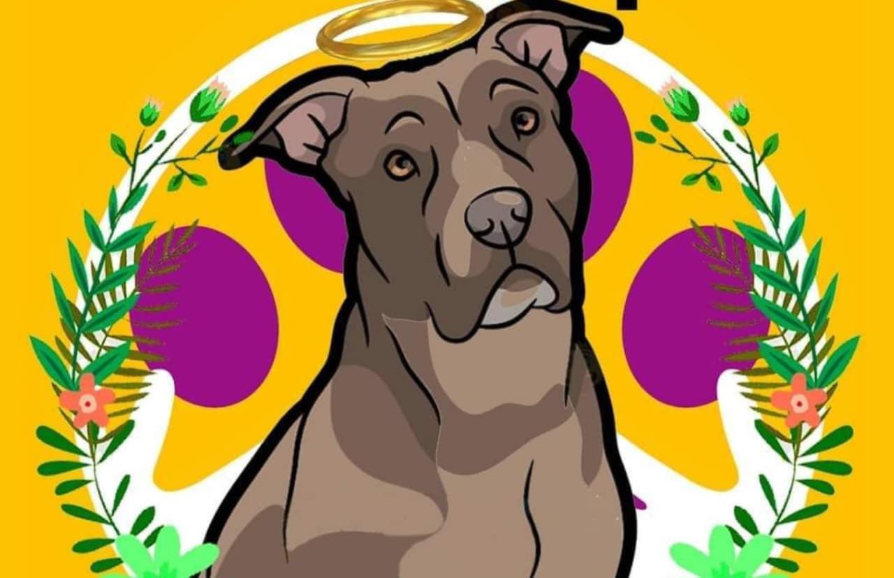 Piden justicia para Luna, perra enterrada viva en Los Cabos