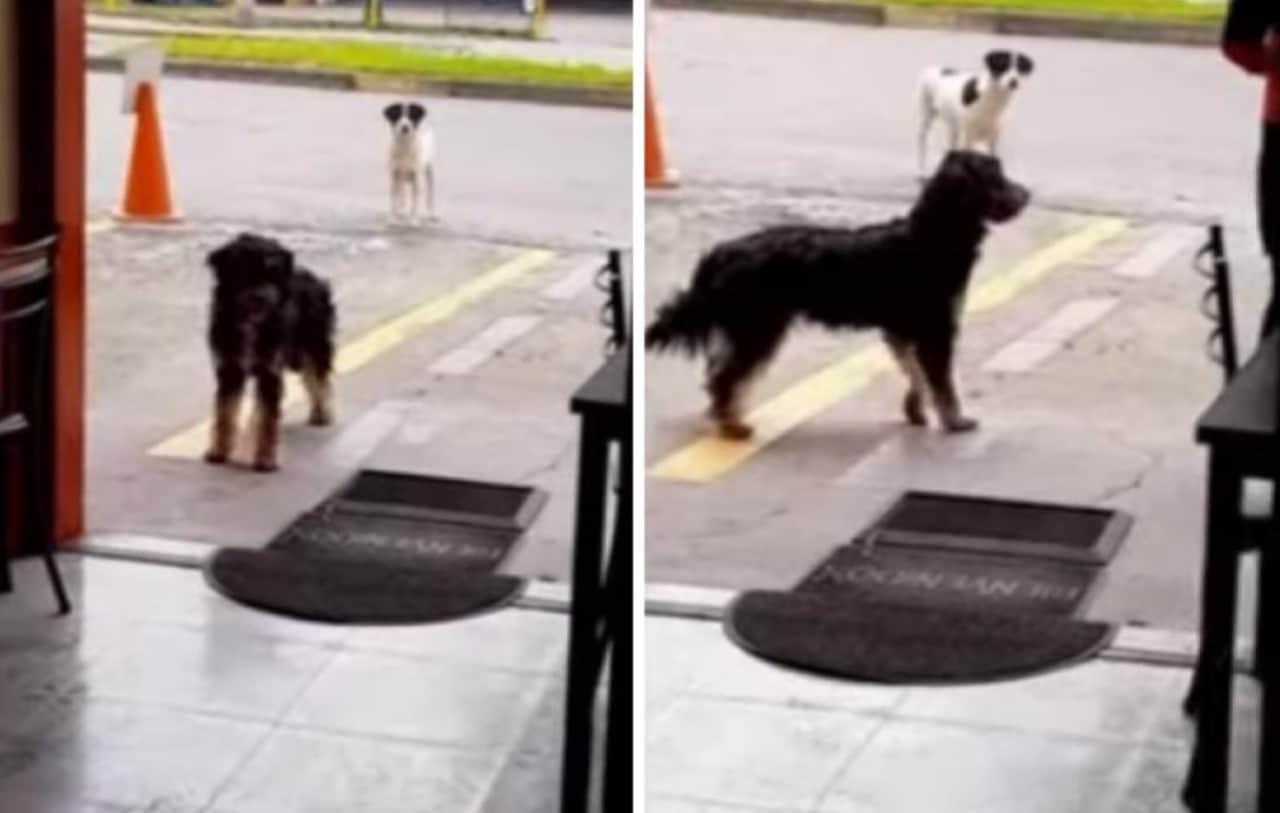 Video: Perrito callejero lleva a su amigo a comer