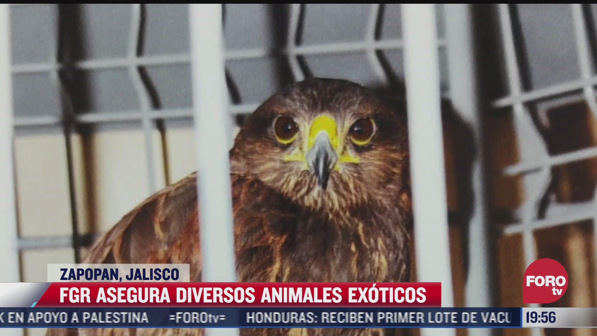 aseguran a diferentes animales exoticos en jalisco