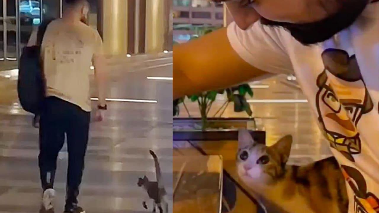 Un trabajador adoptó a una gatita callejera que lo siguió todos los días. Su historia es viral en redes sociales