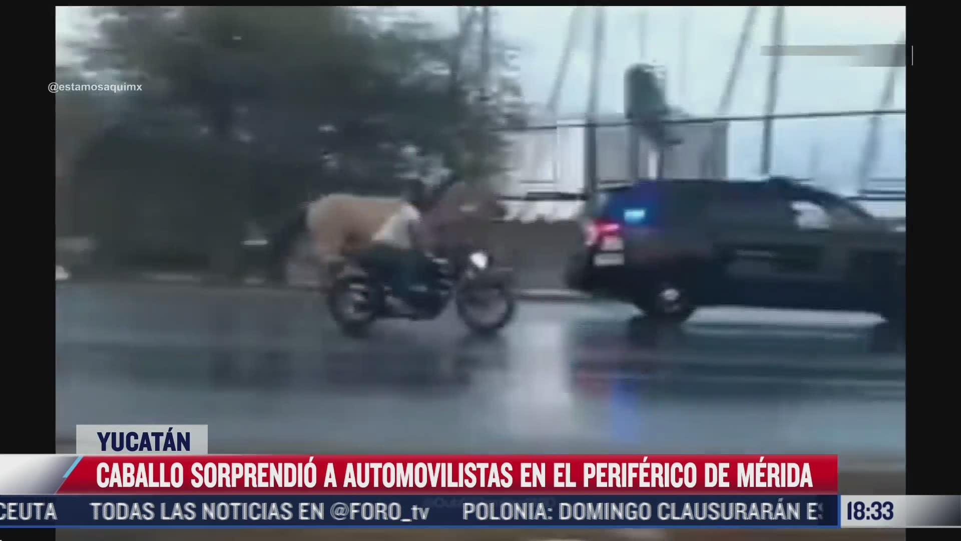 caballo sorprende a automovilistas en periferico de merida yucatan