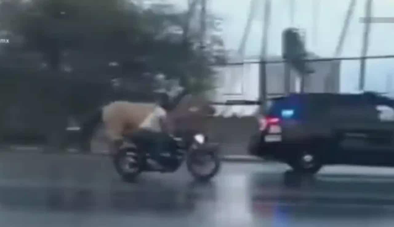 Caballo sorprende a automovilistas en periférico de Mérida, Yucatán