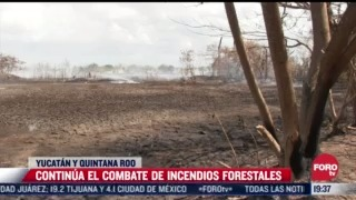 continua combate a incendios forestales en yucatan y quintana roo