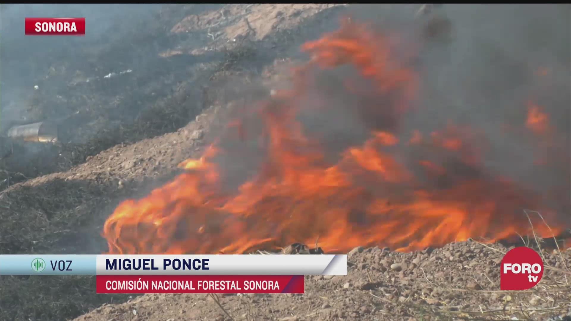 continuan incendios forestales en sonora