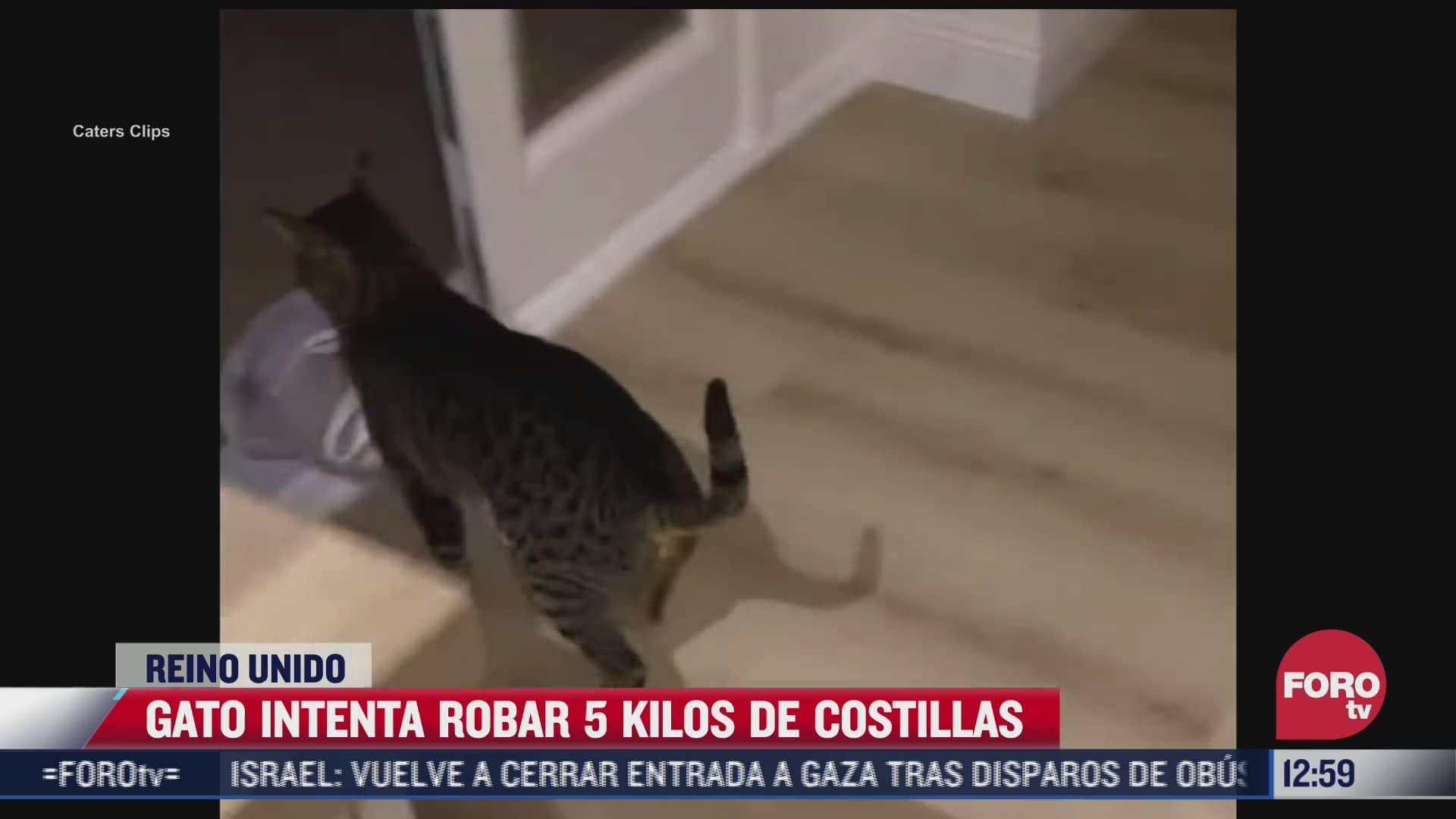 el gato romeo se roba cinco kilos de costillas