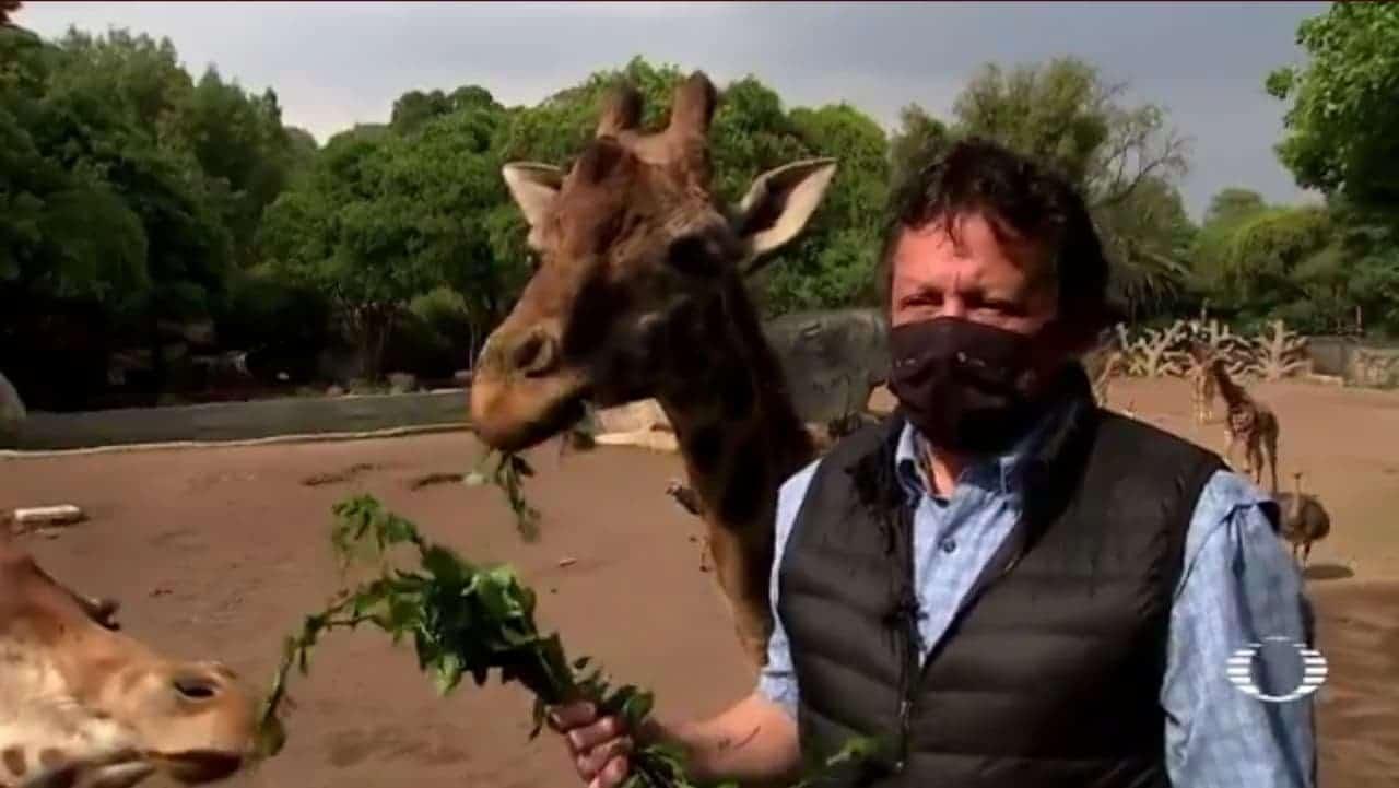 Felices, animales del Zoológico de Chapultepec reciben a visitantes