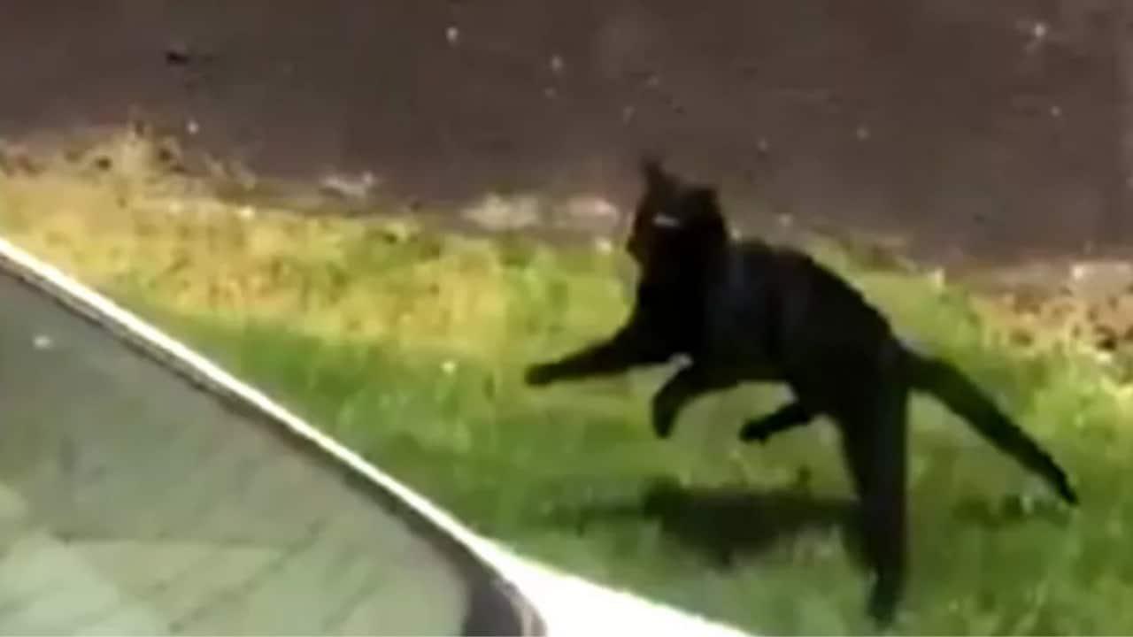 Video: Gato se lanza de un quinto piso de edificio en llamas