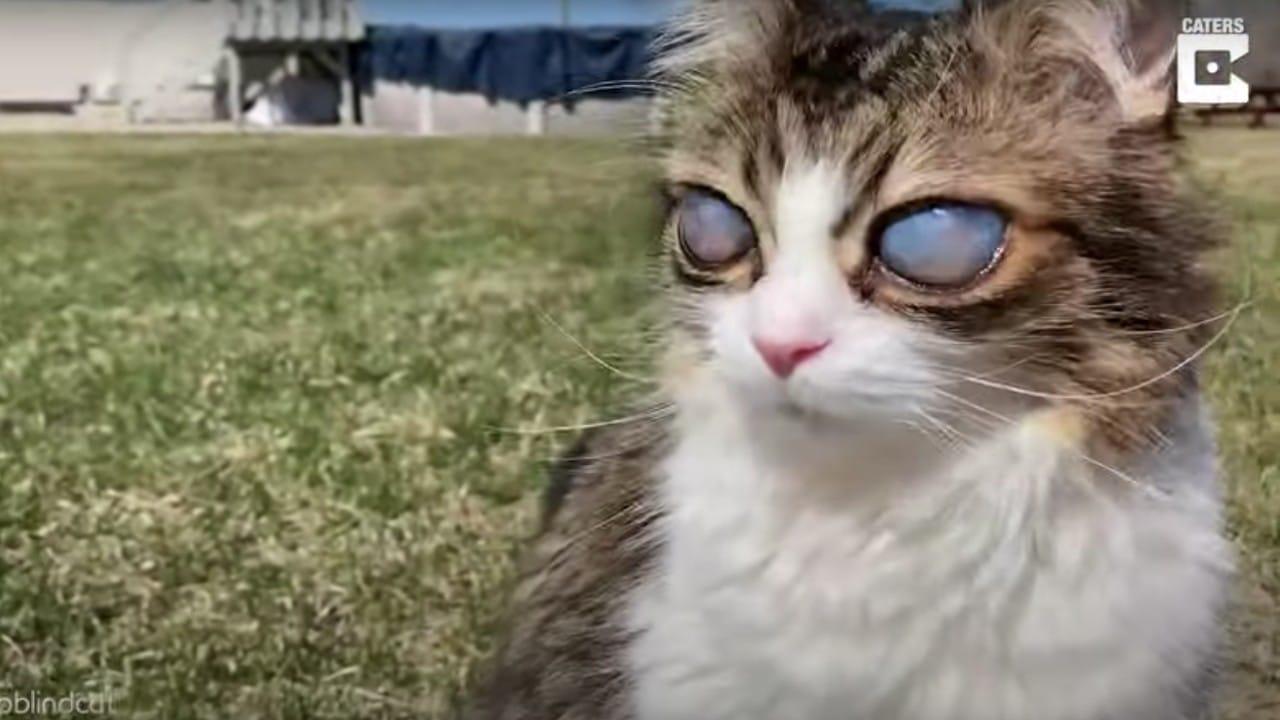 Pico, el gato ciego con ojos inusualmente grandes