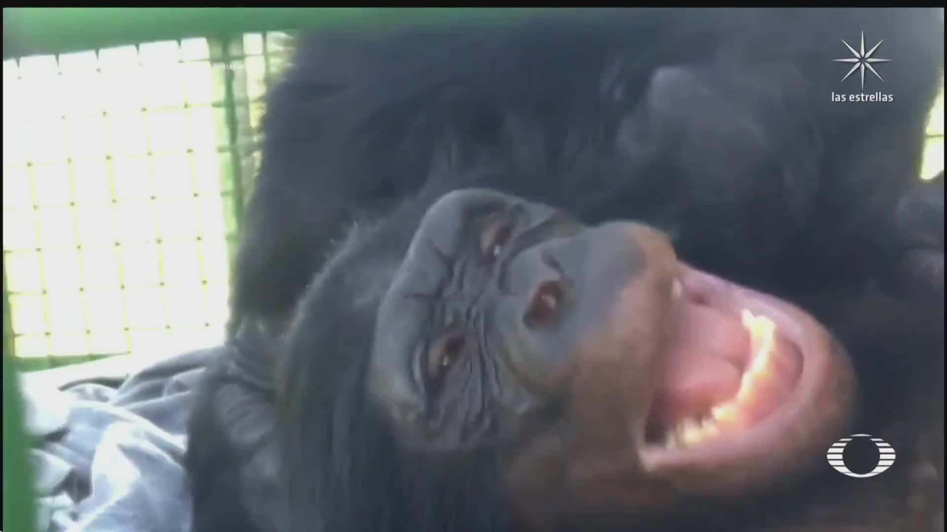 investigadores identifican a decenas de animales que se rien