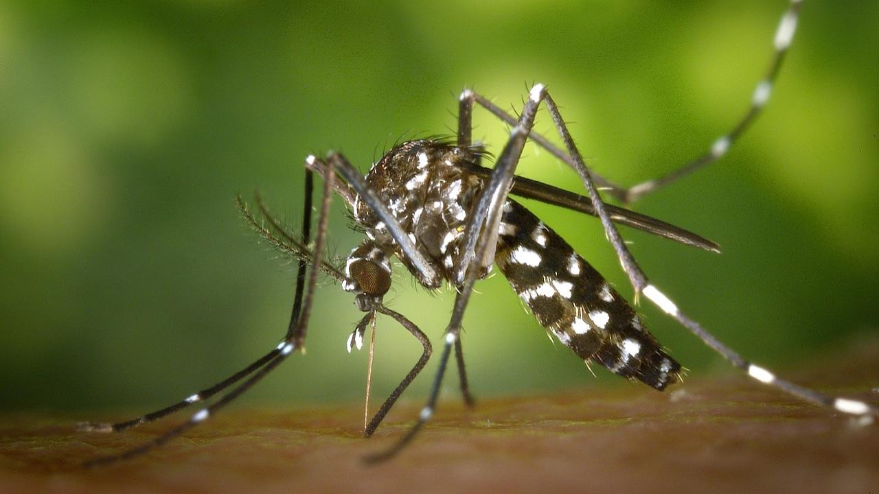 Mosquitos: Qué enfermedades comunes generan y cómo evitarlas