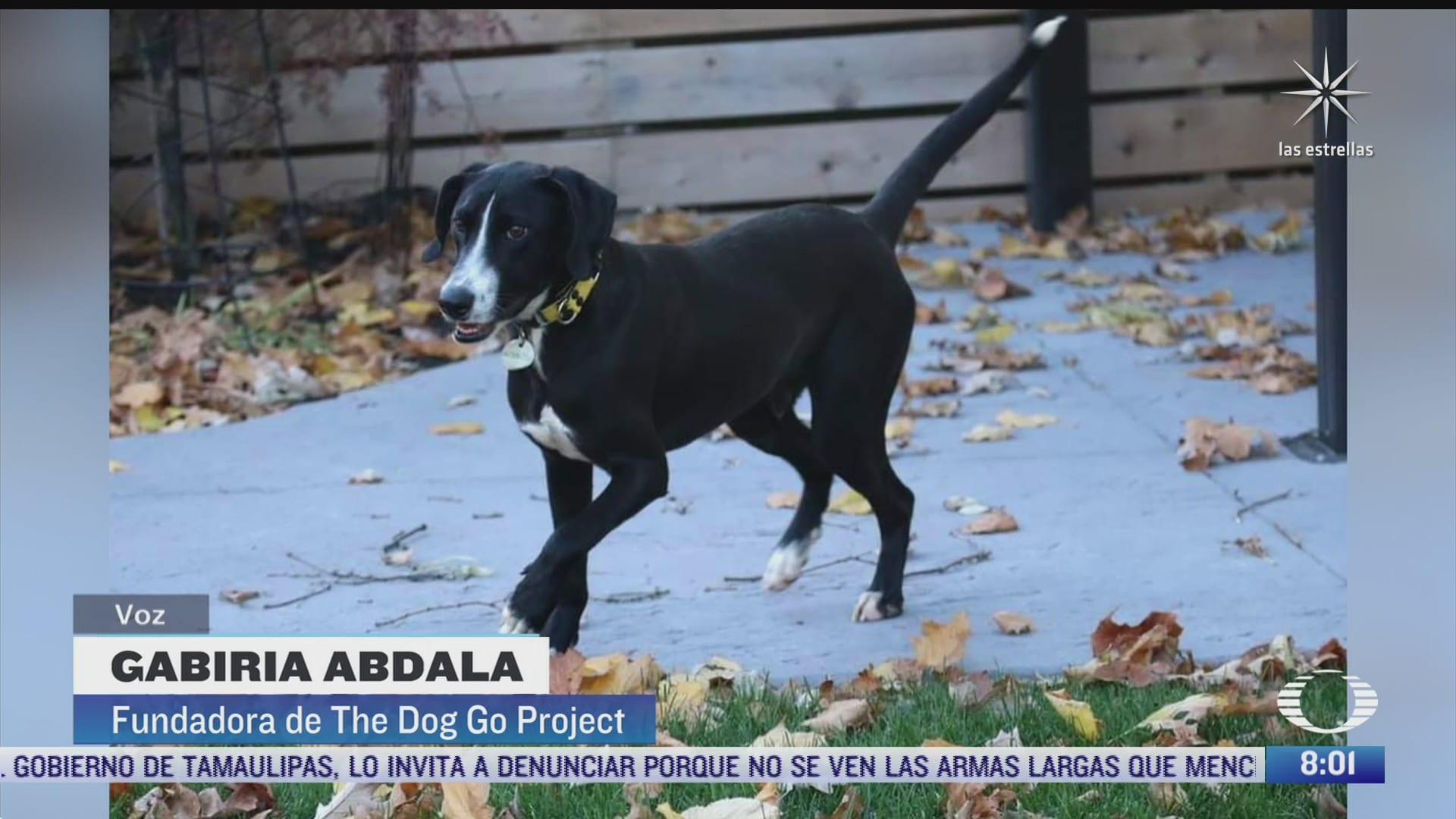 mexicanas rescatan a perritos callejeros y les buscan hogar en canada