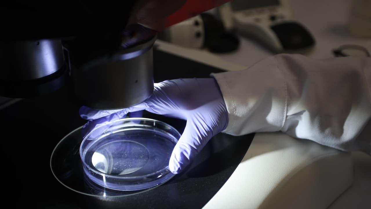 Estudio de una molécula en un laboratorio (Getty Images, archivo)