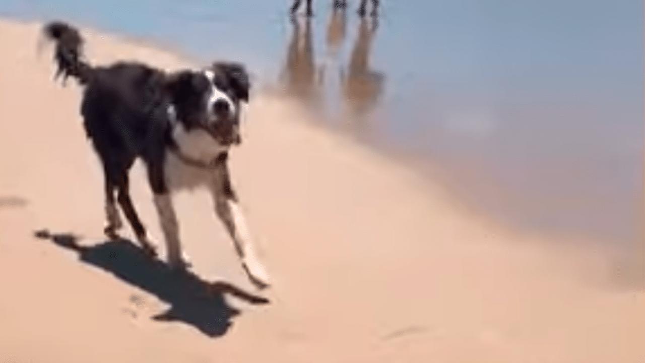 Perro ciego va a la playa por primera vez