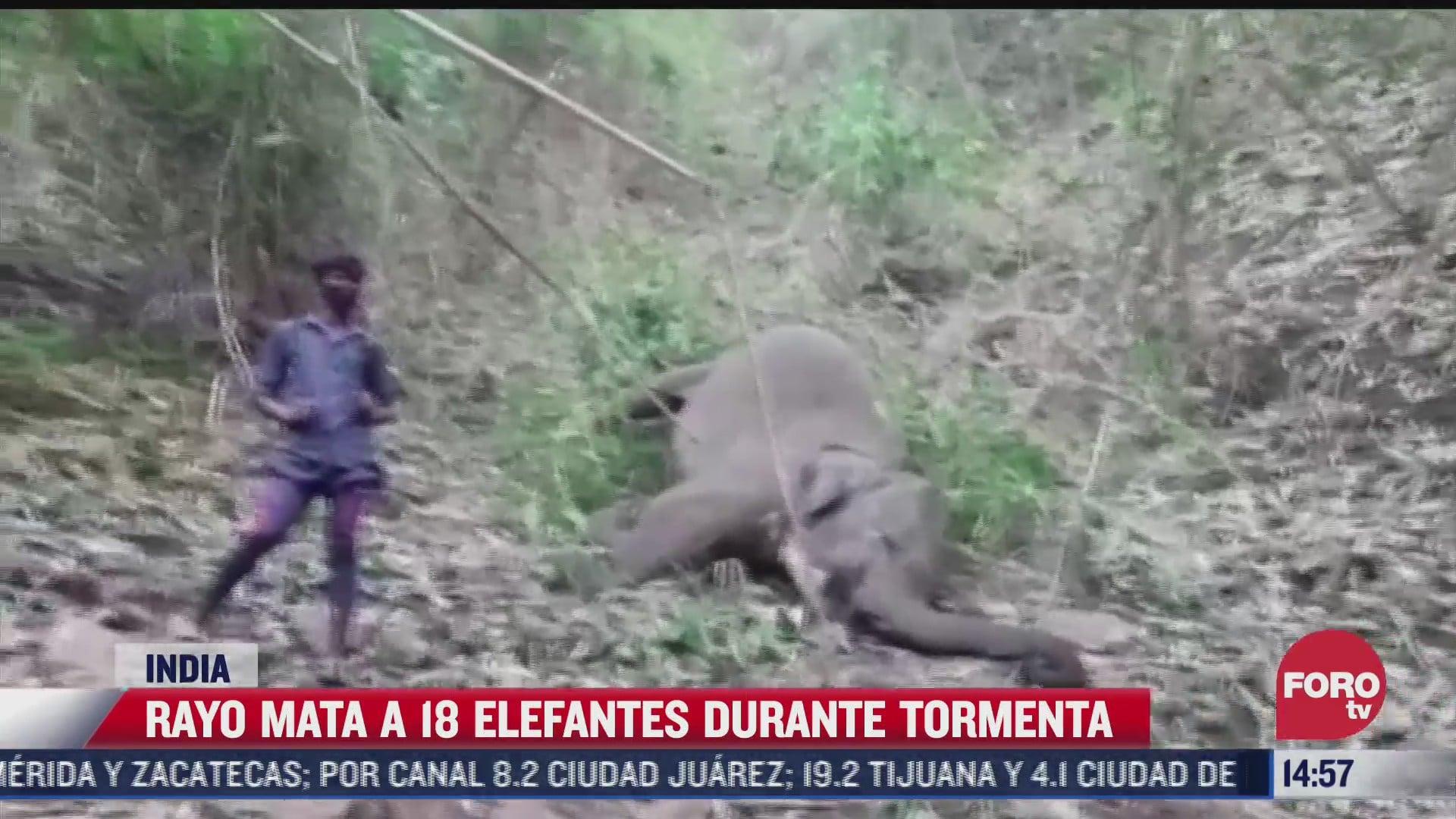 rayo mata a 18 elefantes en la india