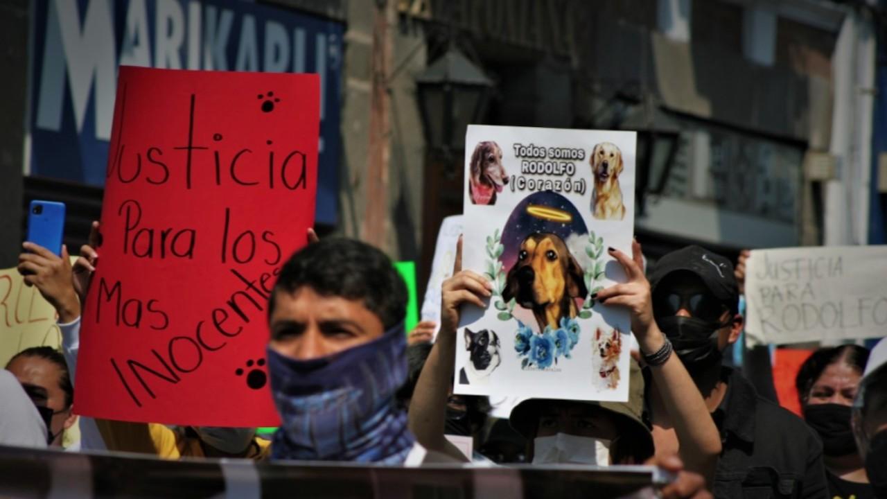 Defensores de animales ante el asesinato del perro 'Rodolfo Corazón' (Twitter: @JrzGuarneros)