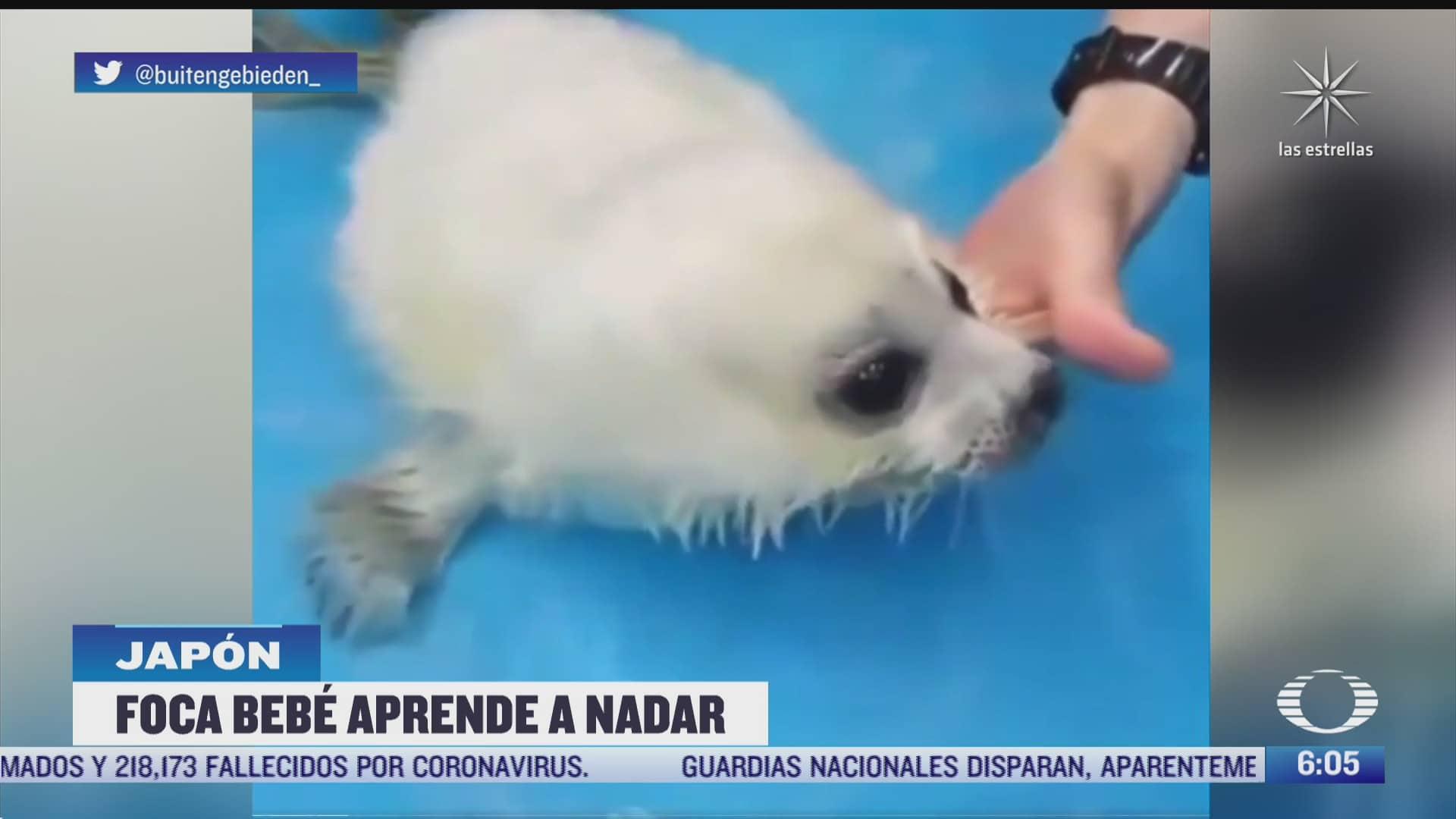 veterinarios rescatan a foca bebe y la ensenan a nadar
