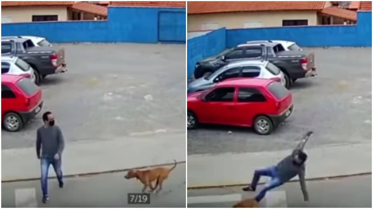 perros, accidentes, atropellado, video viral, captura de pantalla