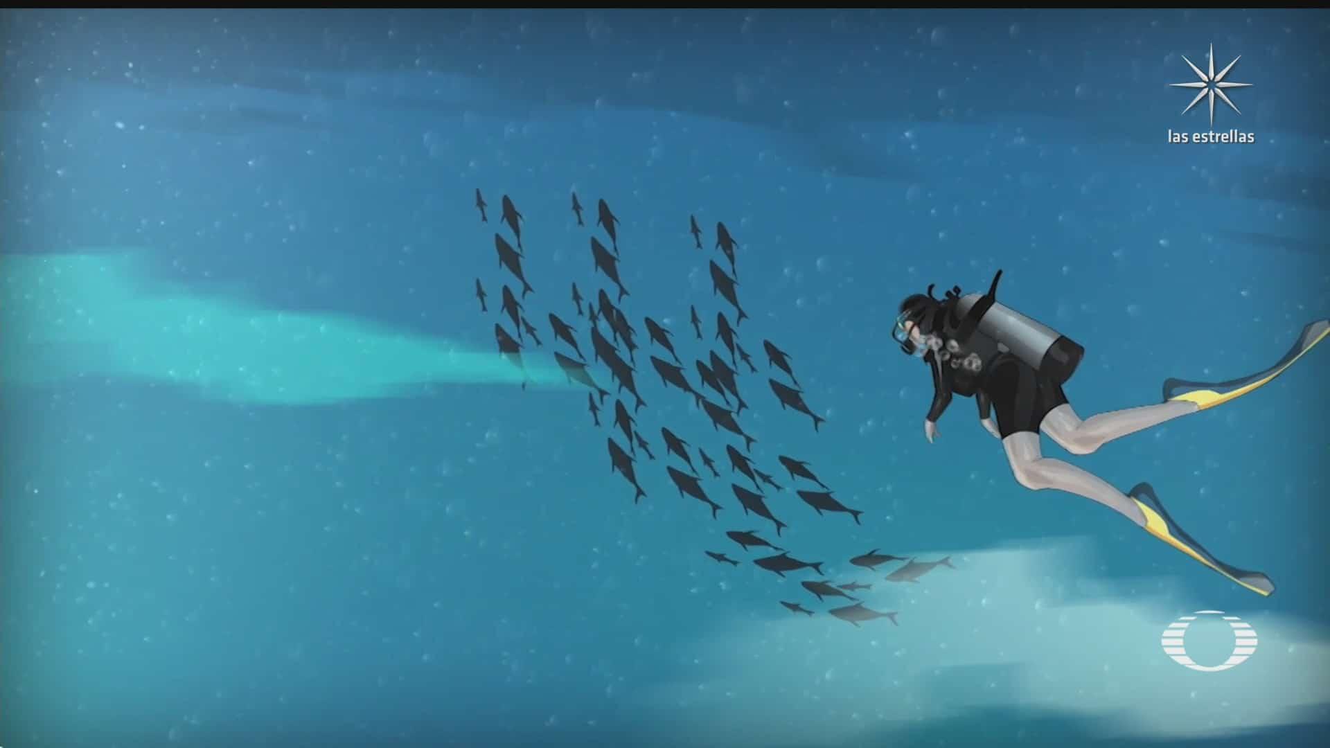ballena jorobada traga a un buzo y lo escupe