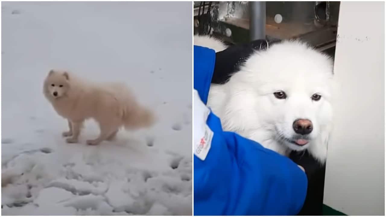Barco de Rusia protagoniza rescate de perro Aika en el Ártico