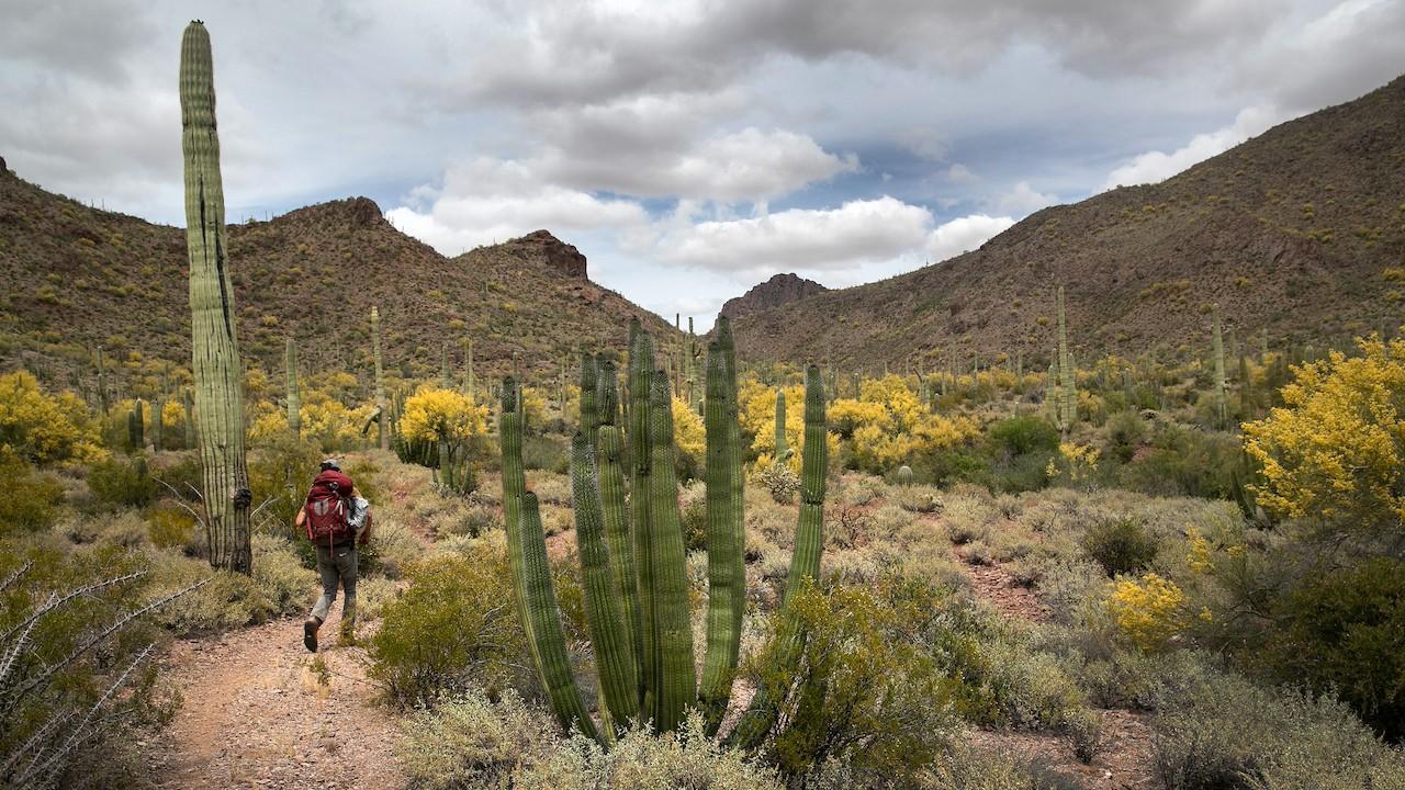 Un migrante en el desierto de Arizona (Getty Images)