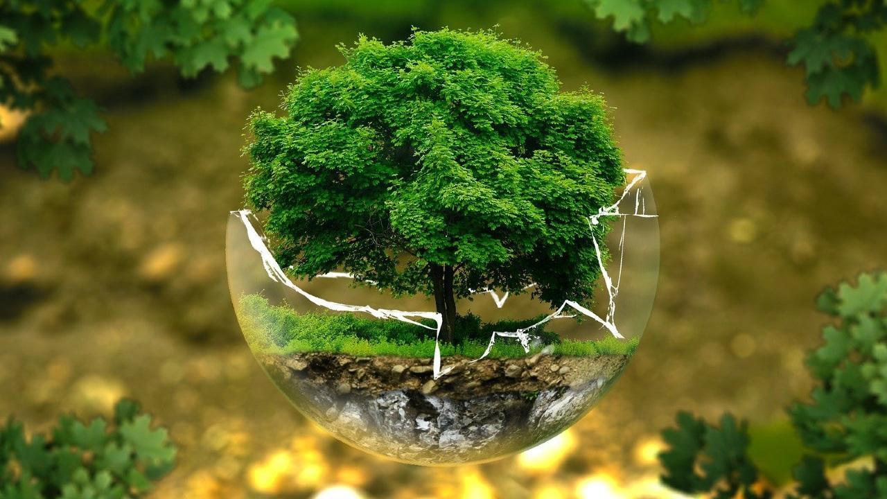 Día Mundial Medio Ambiente Modelo