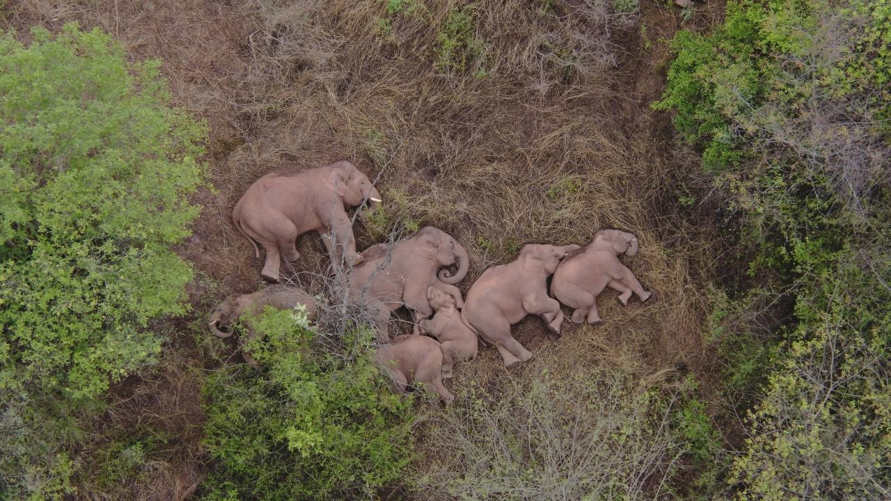 Elefantes, China, medio ambiente, conservación, fotografía