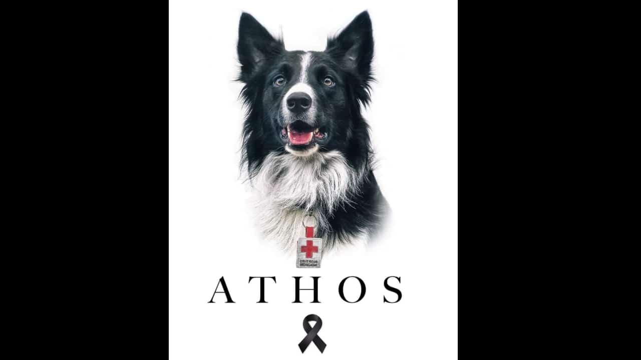 Dan último adiós a Athos, el perro rescatista de Cruz Roja