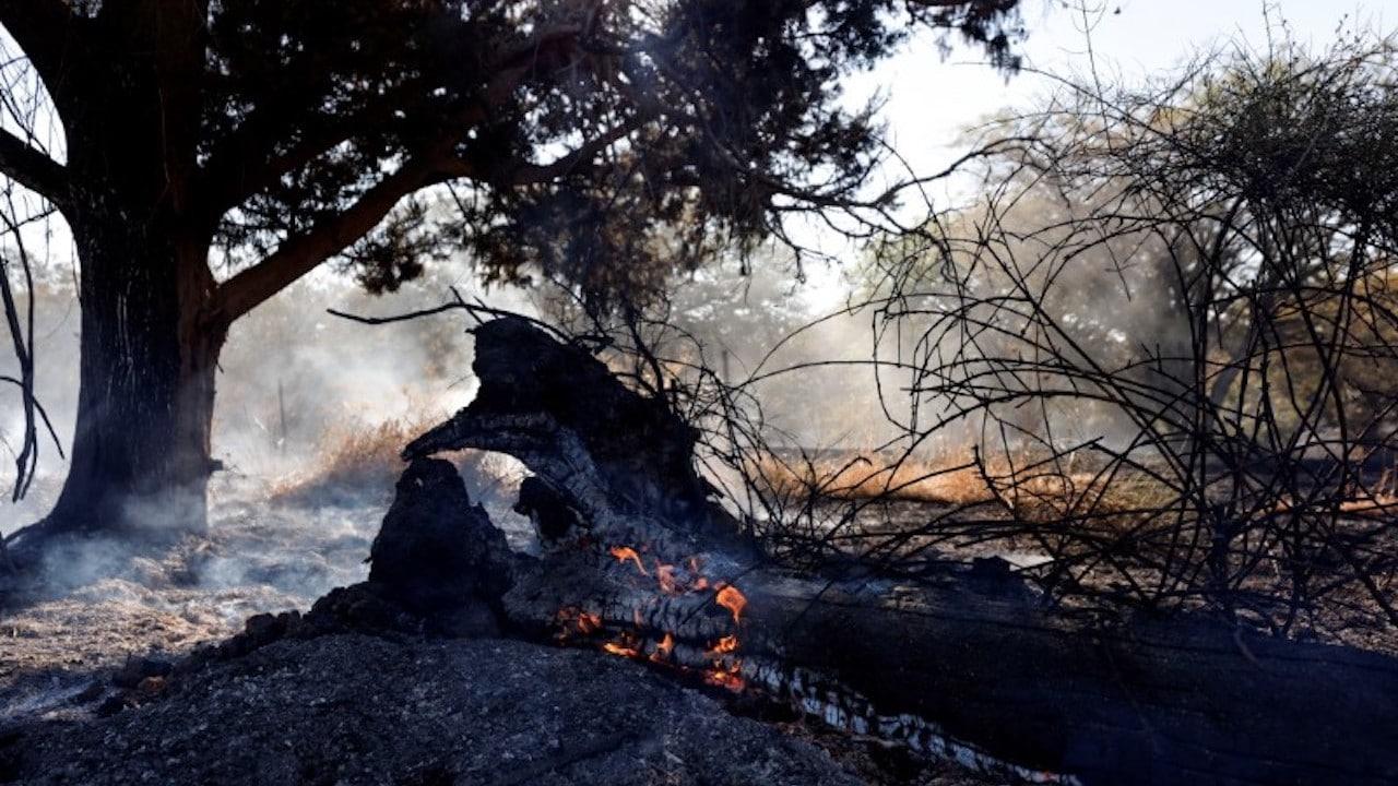 Un campo quemado después de un ataque en la frontera entre Gaza e Israel (Reuters)