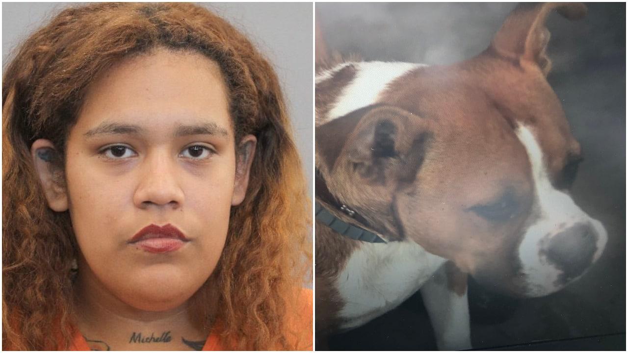 perros, accidentes, crueldad animal, Houston, policías