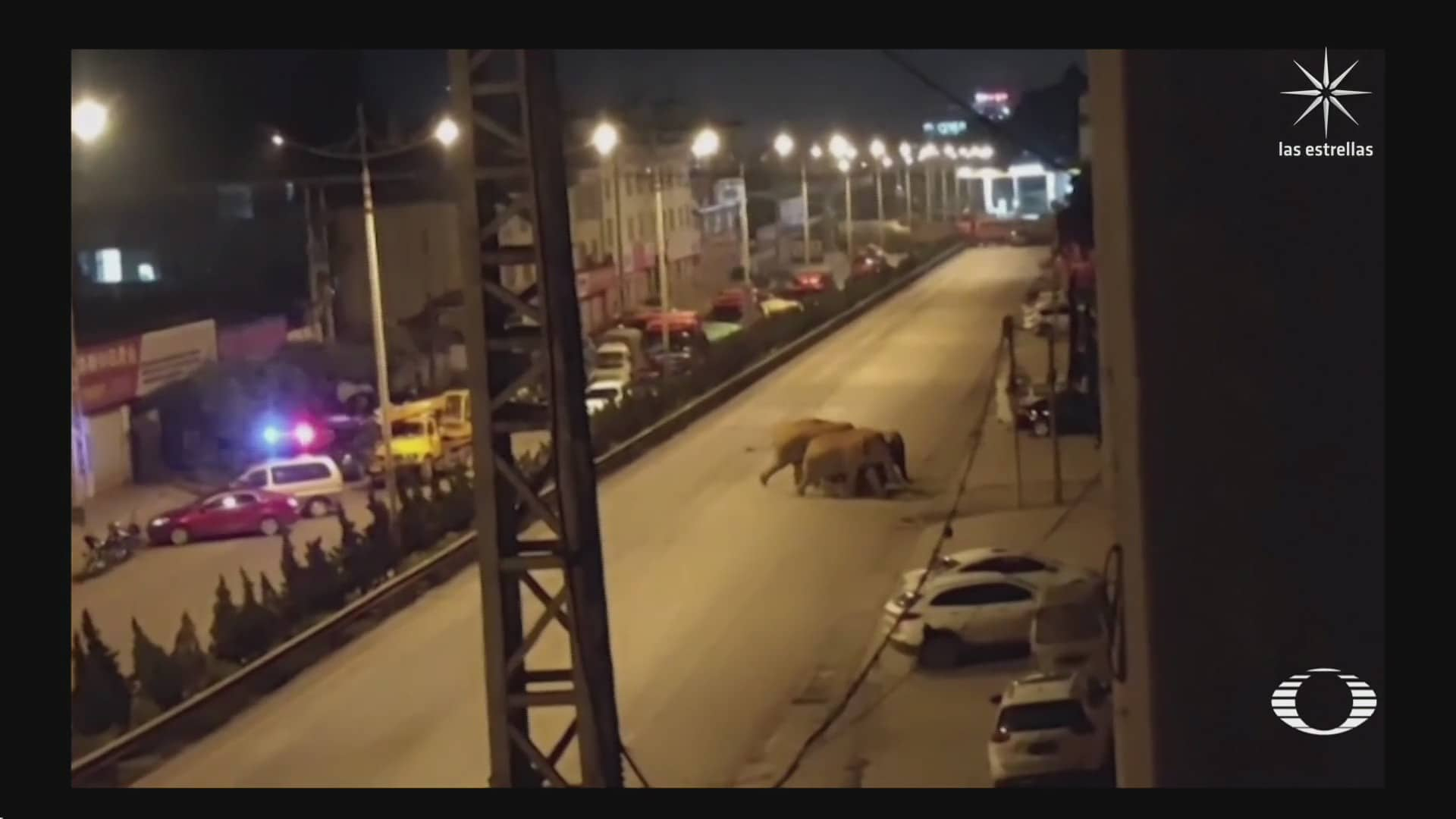 inexplicable migracion de elefantes en china