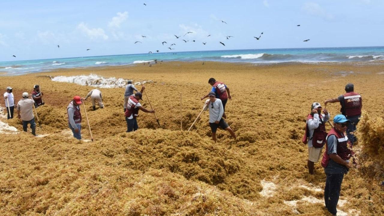 Lluvias dificultan recolección de sargazo en playas de Quintana Roo