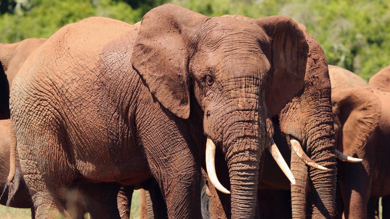 Manada de elefantes salvajes se acerca a la ciudad china de Kunmíng