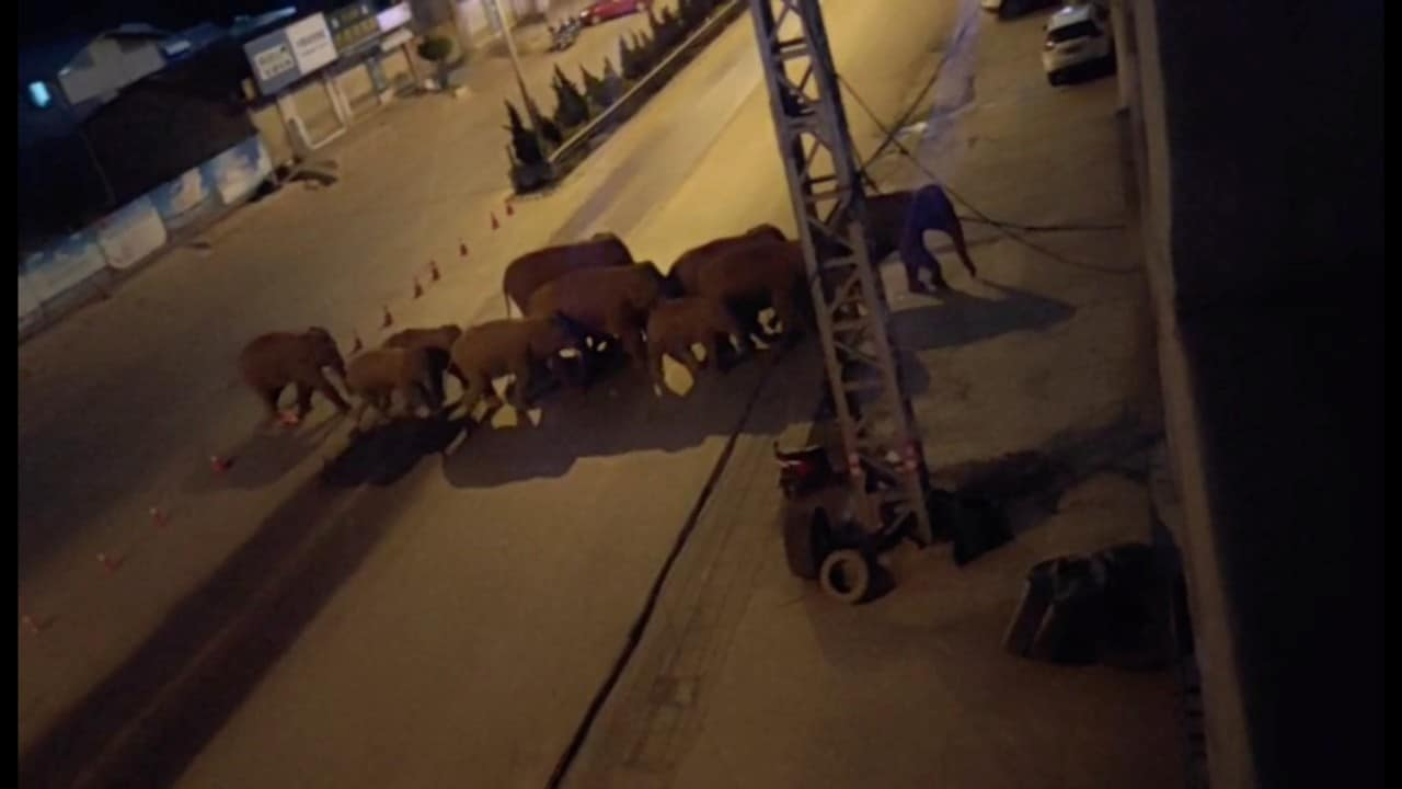 Manada-de-elefantes-llega-a-las-afueras-de-ciudad-china