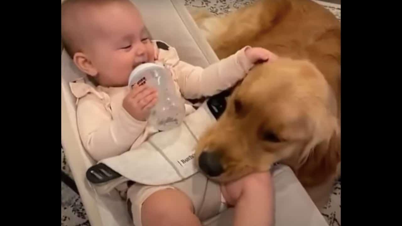 Perrito cuida al bebé de su dueña, video