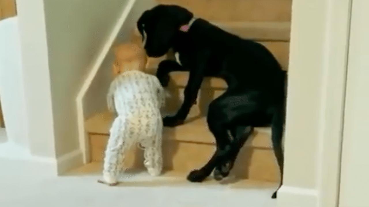 Video: Perrito cuida a bebé y se vuelve viral