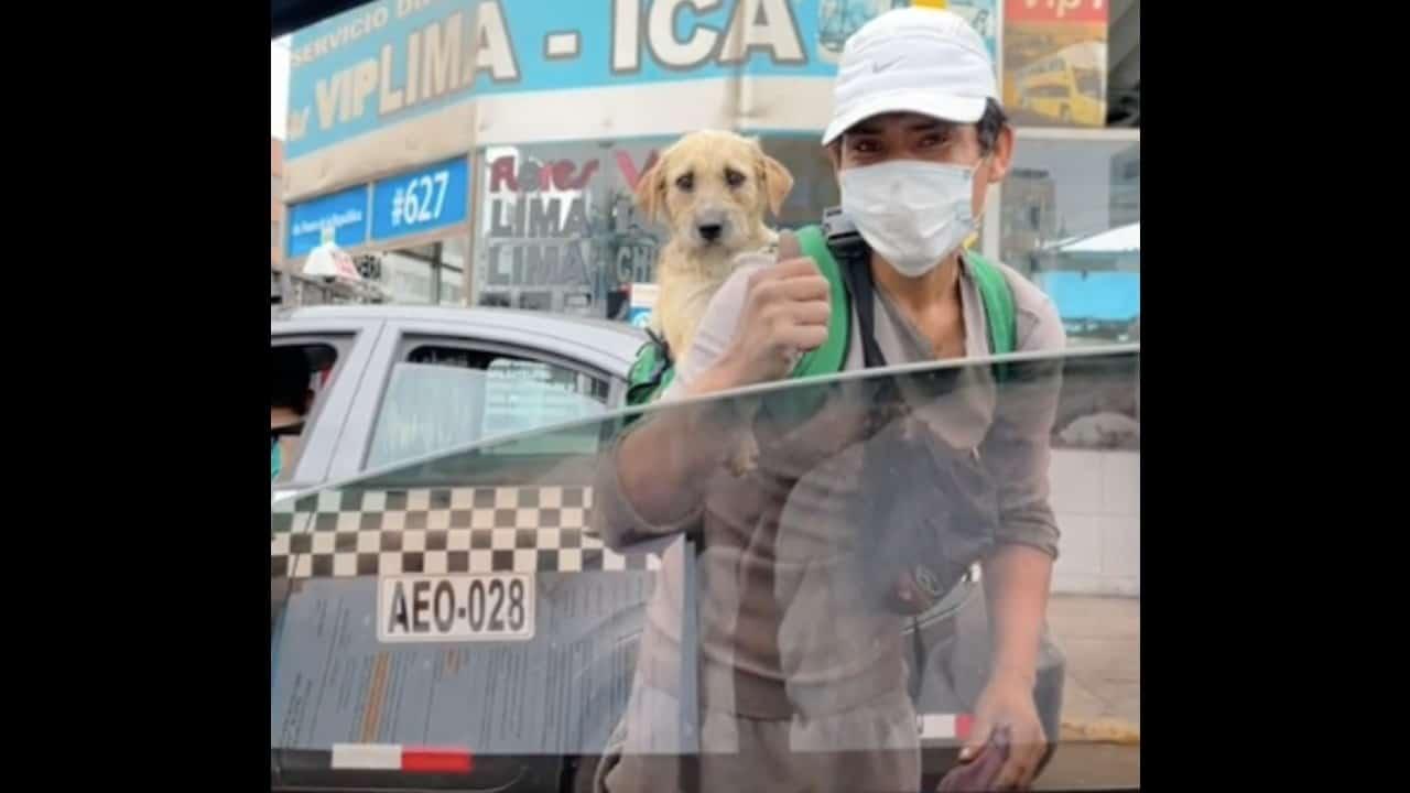 Joven limpia autos con su perrito en la espalda – Noticieros Televisa