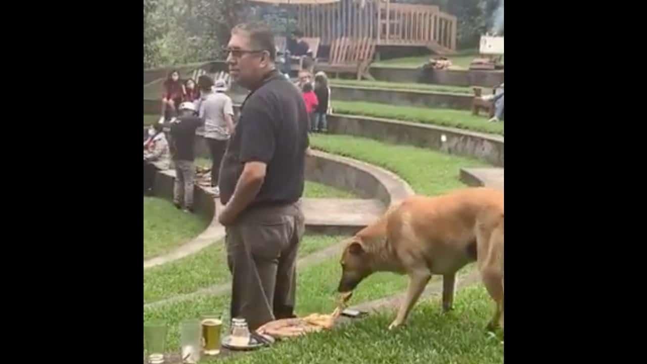 Perrito roba pizza, video se vuelve viral