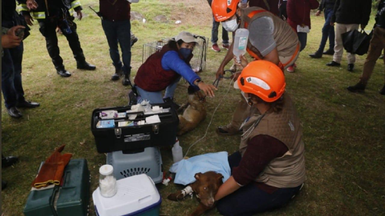 Rescate-de-perritos-que-cayeron-a-socavón