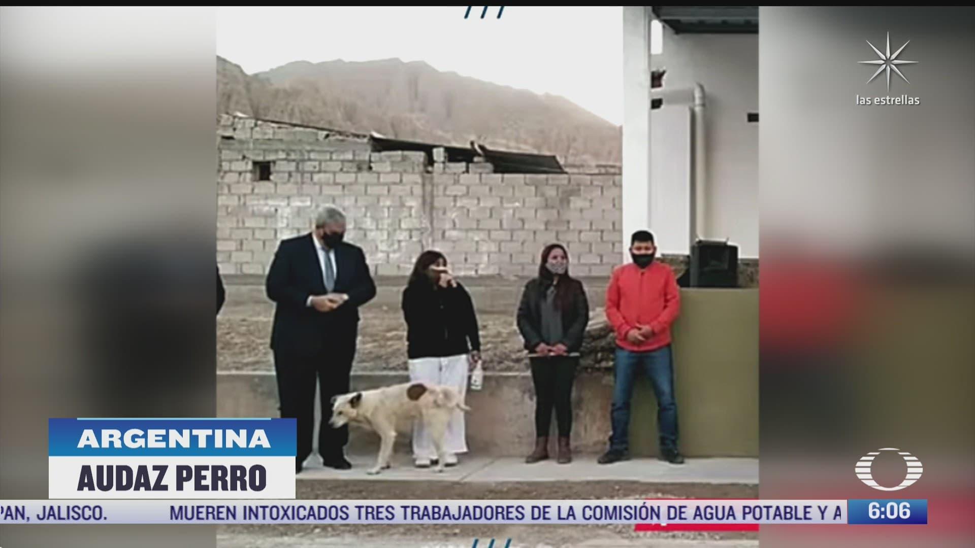 perro orina en pleno evento politico a presidenta del municipio de maimara