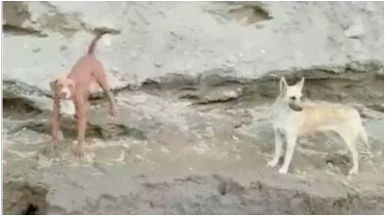 Inicia rescate de los perros Spay y Lomito en socavón de Puebla