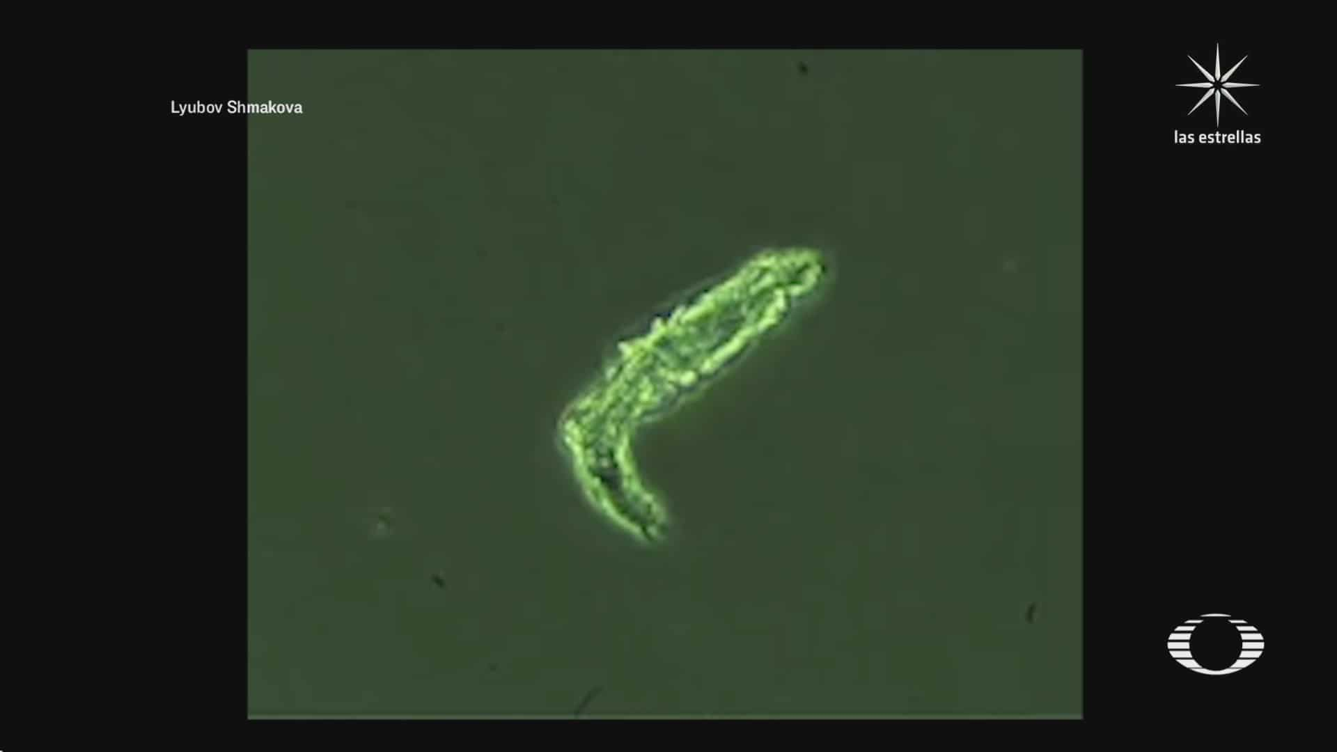 reaniman a microbio que paso congelado mas de 24 mil anos