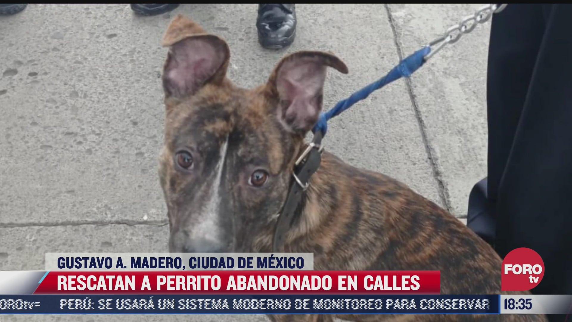 rescatan a perrito abandonado y amarado a poste en la cdmx