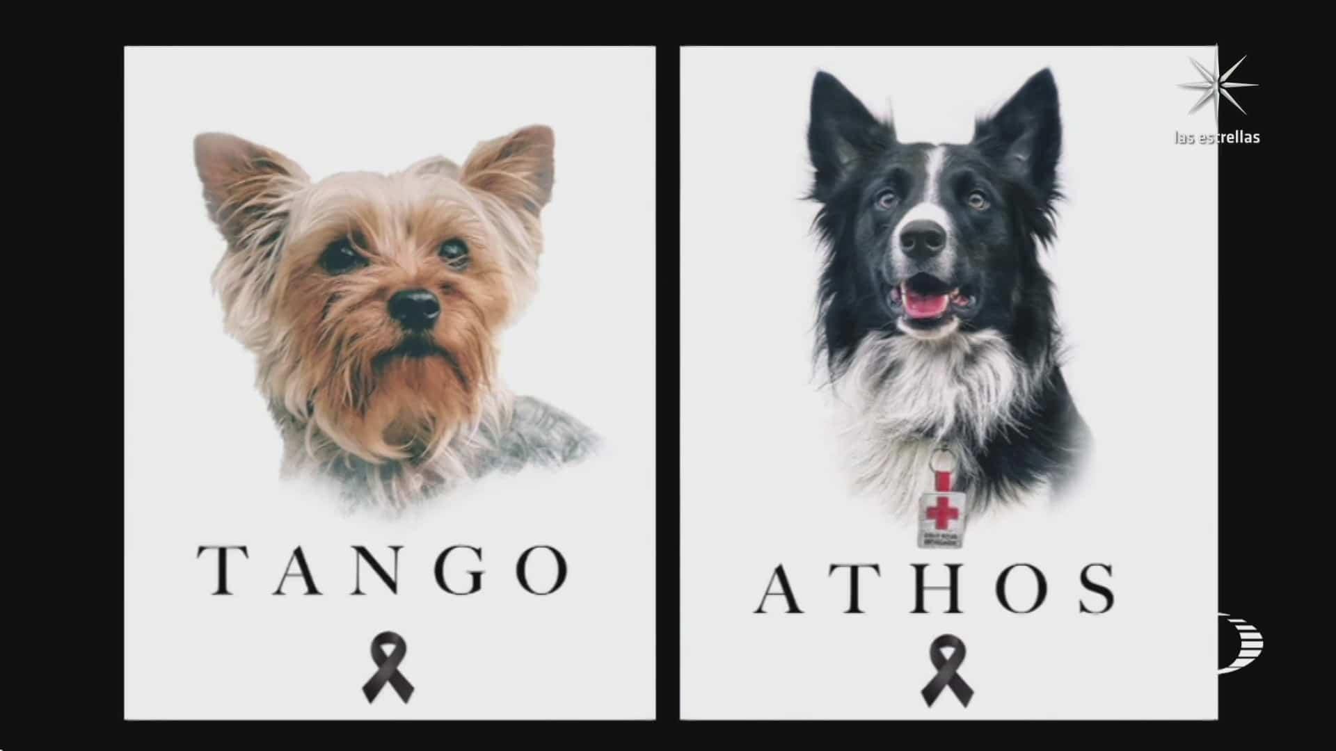 rinden homenaje a perritos rescatistas envenenados