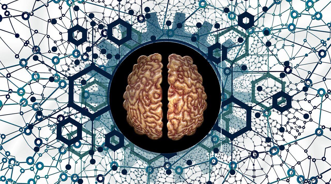 Sexo ayudaría a recuperar neuronas sugieren estudios