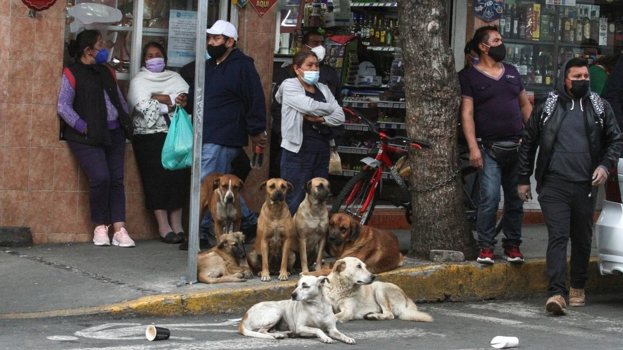 2 de cada 3 mexicanos consideran que su ciudad es insegura: INEGI