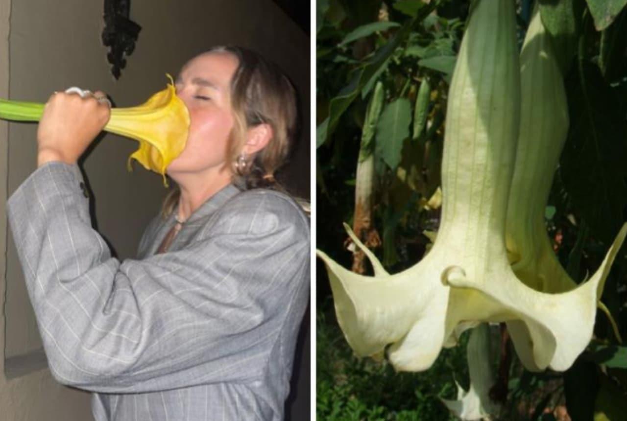 Tiktoker se envenenó con una flor tóxica, un floripondio