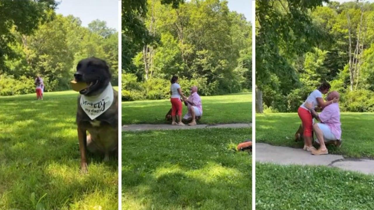 Perro ayuda a su dueño a pedir matrimonio a su novia: Video