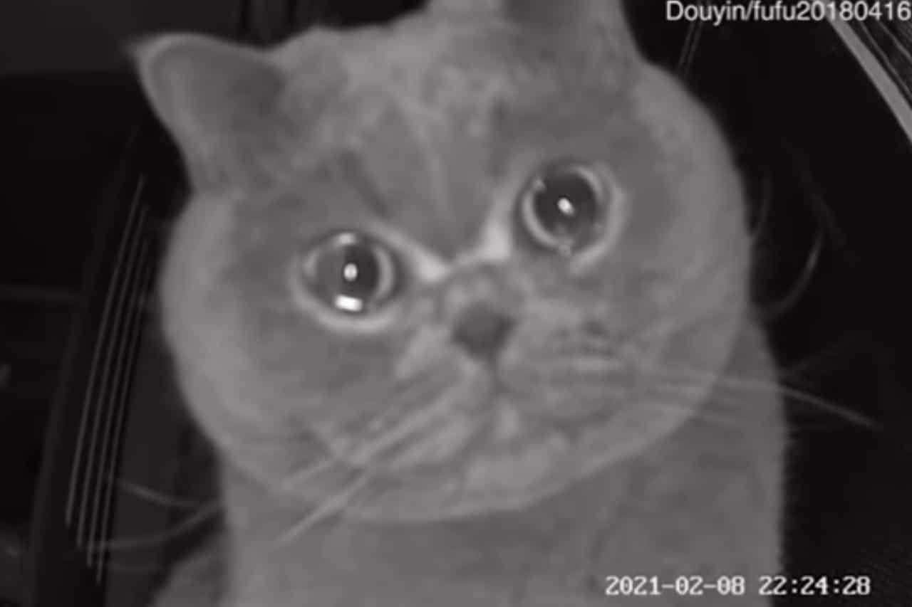 Gato en China llora porque extraña a su dueña: Video