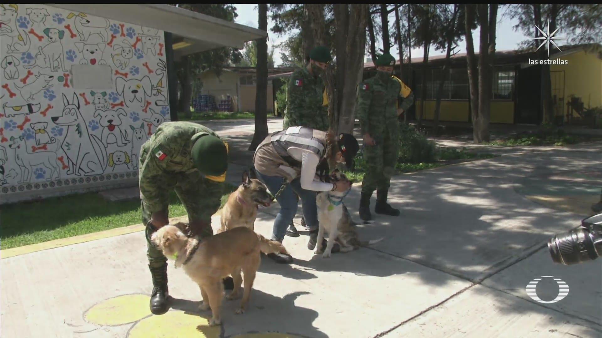 adaptan refugios para perros abandonados en aeropuerto de santa lucia